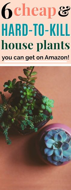- House Plants - 6 Fun & Easy Plants to Grow Indoors 6 Fun and Hard-to-Kill House Plants Easy House Plants, Easy Plants To Grow, Growing Plants Indoors, House Plants Decor, Plant Decor, Indoor House Plants, Herbs Indoors, Growing Herbs, Houseplants Safe For Cats