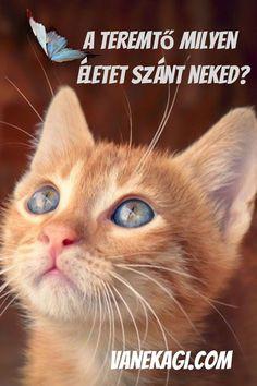 Mi az oka annak, hogy eddig nem bíztál kellőképpen magadban? Mi az a dolog ami akadályt gördít az életed előrehaladásában, amin változtatnod kell? A megoldás az, hogy tedd rendbe az életed. Hogyan indulj el? Nem tudod a lépéseket? Kérd a Felsőbb éned forrásodtól jövő üzenetet! Funny Cat Names, Cute Cat Names, Cute Cats, Funny Cats, Ginger Kitten, Ginger Cats, Orange Kittens, Cats And Kittens, Kitten Names Girl