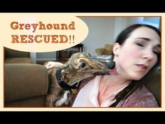 Fostering! | Meet Lucky Charm | MamaKatTV - YouTube