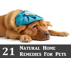 21 Natural Home Remedies For Pets | Health & Natural Living