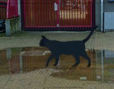 City-cat by Fons Heijnsbroek
