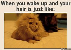 GIF: Bad Hair Day - www.gifsec.com
