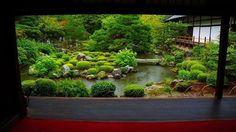 京都 等持院の緑。雨でしっとり。少し前のんです。 #等持院 #青もみじ #雨 #しっとり #京都 #神社仏閣 #お寺 #tojiin #temple #kyoto #rainy