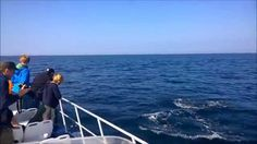 #dolphins #dolphins everywhere, #beautiful footage taken just off #Grassholm in…