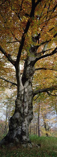 Tree In The Black Forest, Germany