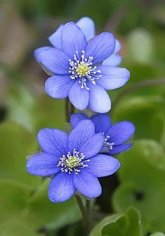Beautiful flowers photography Amazing flowers - My Garden Beautiful Flowers Garden, Exotic Flowers, Amazing Flowers, Pretty Flowers, Purple Flowers, Beautiful Gardens, Wild Flowers, Purple Plants, Purple Garden