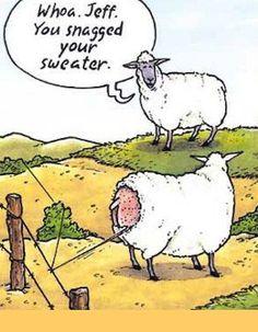 Snagged sweater? #knitting #knittinghumor #sheep #yarn
