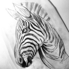 #Zebra #tattoo #sketch #istanbul #dövme #ink #blacktattooart #drawing #ink