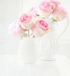 pink roses & white vases