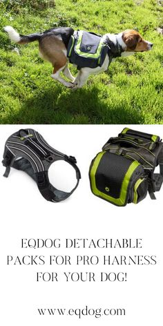 Check out our online shop for more outstanding dog equipment! Walking Equipment, Dog Walking, New Toys, Dog Owners, Dog Training, Dog Breeds, Your Dog, Dog Cat, Advice