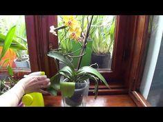 Как я опрыскиваю свои орхидеи по утрам. - YouTube