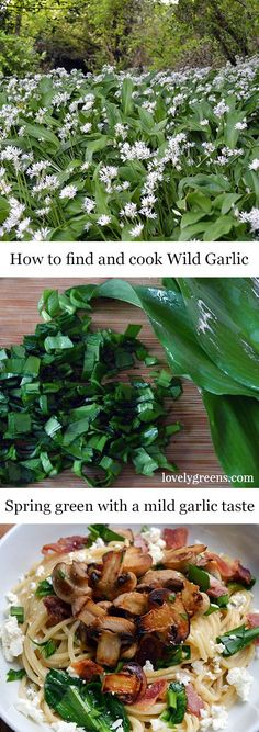 Wild Food Foraging: Finding and using Wild Garlic How to find, pick, and use Wild Garlic in fresh spring dishes. This delicious wild edible is a must-have for any wild food forager. Garlic Flower, Edible Wild Plants, Brunch, Garlic Recipes, Wild Edibles, Survival Food, Survival Quotes, Medicinal Herbs, Hacks