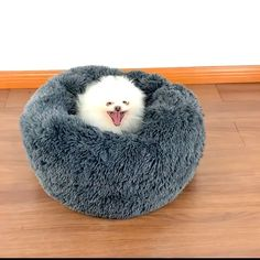 🐾Sold OUT 3 times already 😴 Dog Bed Bliss - The Snuggle Sac forms to your pup's body dog accounts, cutest dogs, adorable dog, dog bed for sma - Cute Dog Beds, Dog Beds For Small Dogs, Diy Dog Bed, Pet Beds, Cute Dogs, Dog Cave, Dog Bedroom, Dog Furniture, Cheap Furniture