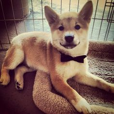 bow tie...I need this for Sam