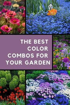 to Create Gorgeous Garden Color Schemes Create gorgeous color schemes for your garden + some awesome color scheme examples to try.Create gorgeous color schemes for your garden + some awesome color scheme examples to try. Amazing Gardens, Beautiful Gardens, Beautiful Flowers, Succulent Gardening, Vegetable Gardening, Gardening Tips, Organic Gardening, Gardening Services, Gardening Courses