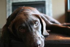 It's hard being a dog | Flickr - Photo Sharing!
