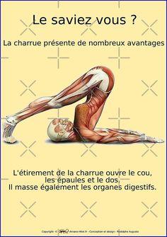 « Planches Musculo-squelettique des positions de Yoga - N°16 » par rodolphe Augusto   Redbubble
