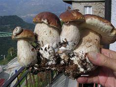 XXIX edizione della Sagra dei funghi a Bema - 8 settembre 2013