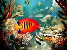 Image result for Tropical Fish