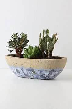 Umbellifers Herb Pot, Small Bowl #anthropologie