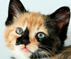 Lovely calico