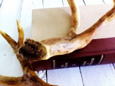 Tutorial to make faux deer antler from tree branch, foil paper and clay.  Brilliant!