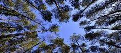 Pădurea sursa necesară de oxigen a organismului
