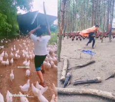 Carl Meme, Army Video, Cute Animals, Funny Memes, Chicken, Pets, Pretty Animals, Cutest Animals, Cute Funny Animals