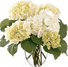 big white flowers - Google Search