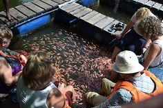 Fiskspa på Sri Lanka