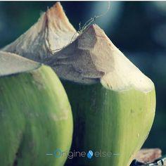 Fondez pour le plaisir du parfum exotique de la noix de coco fraîchement cueillie 🥥 Découvrez les produits sélectionnés par Origine Else (lien en bio) #coconutoilfamily #coconutoil #huiledecoco #coco #skinnyandco #skinny #coconut #raw #noixdecoco #naturel #natural #cosmetics #beauty #picoftheday #cosmetique #facecream #bodycream #health #picoftheday #healthy #soinvisage #soincorps Coconut, Skinny, Fruit, Food, Coconut Oil, Tips, Products, Home, Meal