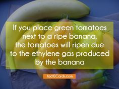 If you place green tomatoes next to a ripe banana, the tomatoes will ripen due to the ethylene gas produced by the banana - http://factecards.com/place-green-tomatoes-next-ripe/