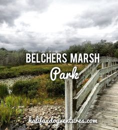 Belchers Marsh Park in Halifax, Nova Scotia makes it easy to get your daily dose of nature. halifaxdogventures.com