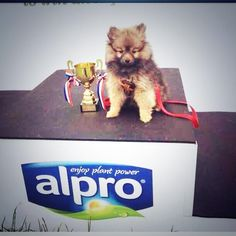 A pup takes the podium at Catton Hall! Cosmos, Pup, Challenges, Dog Baby, Puppies, Space, Puppys, Outer Space