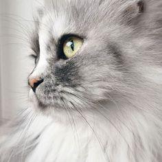 Alice, uma gata adotada com o pelo 'mármore' mais lindo do mundo!