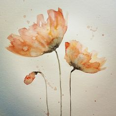 watercolor painting of poppies - Bing Images Watercolor Poppies, Watercolor Art Paintings, Watercolor Cards, Painting & Drawing, Learn To Paint, Painting Inspiration, Flower Art, Art Projects, Kawaii