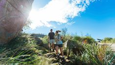 Get a taste for the hiking life on these manageable and easily reached trails close to the city Sydney Skyline, Easy Day, Swimming Holes, Round Trip, Day Hike, Stunning View, Public Transport, Natural Wonders, Day Trips
