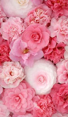 Pink Flowers Garden Summer Cut Dried Colorful