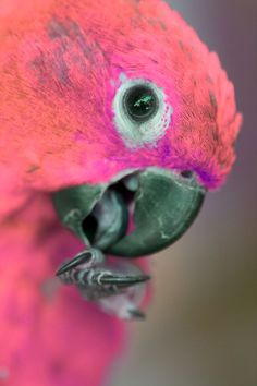 Parrot - from Bird of Paradise
