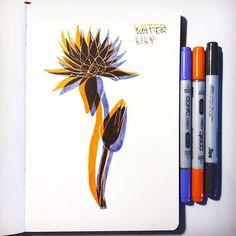Julia Fink (@julia_gefinkelt) • Instagram-Fotos und -Videos Copic Ciao, Marker Art, Floral Illustrations, Water Lilies, Glitch, Flower Art, Lily, Cool Stuff, Drawings