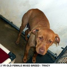 Tracy is a friendly girl who would love to take walks with you.  She needs to get out of the shelter and be someones special dog. Please don't leave her here.      Please help us SAVE Tracy..
