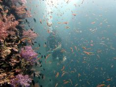 Scuba Diving in Andaman Sea Phuket Thailand