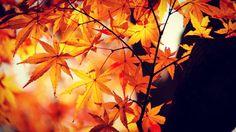 #autumn #autumncolors #autumnleaves #fallenleaves #autumngram #nature  #紅葉 #落葉