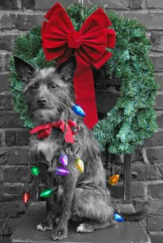 Super cute dog Christmas card! Zoe the Rescue Dog
