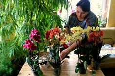 Život s orchideami: kvetiny, ktoré vedia uraziť aj poďakovať! Colorado, Plant, Aspen Colorado, Skiing Colorado