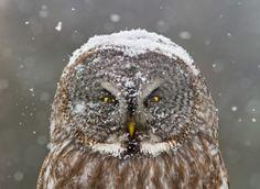 Winter Portrait by Mircea Costina