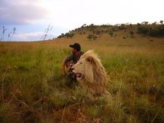 Kingdom of the White Lion Facility in Gauteng Provence, South Africa ran by Kevin Richardson.