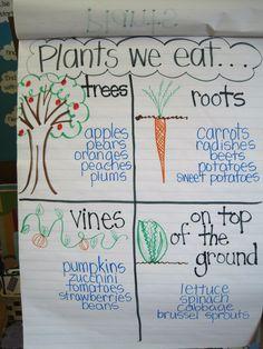 New Ideas Plants Kindergarten Crafts Anchor Charts Preschool Garden, Preschool Science, Science Classroom, Science Activities, Classroom Activities, Science Ideas, Group Activities, Science Lessons, Science Centers