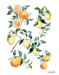 Year of the Citrus (print)