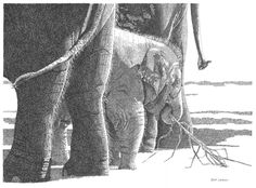This drawing of elephants is based on photos I took last year at the Oklahoma City Zoo. Used all of my Rapidographs, except .18. Pictured are sisters Asha and Chandra and baby Malee, born April 2011. Art by Renee Lawrence http://www.inktankart.com/gallery.html